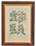 Wild Flowers Handmade Traditional Picture Frame